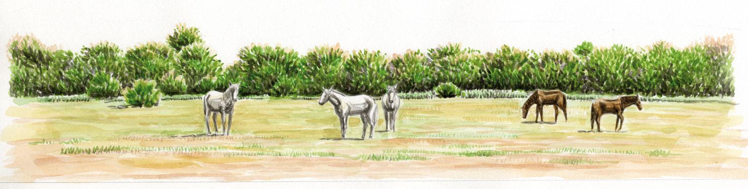 bas-de-page-chevaux