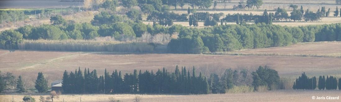 Le projet de centrale photovoltaïque de Calissanne, à Lançon-de-Provence