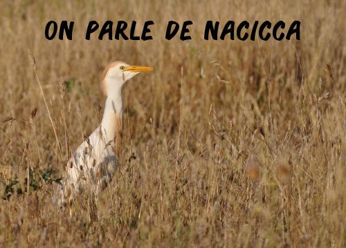Le journal le Ravi évoque les pesticides interdits retrouvés dans les rizières de Camargue